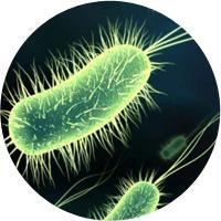 Probiotichni fibri